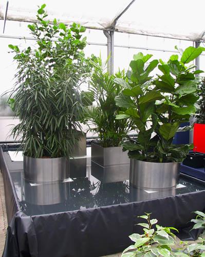 Landschaften mit Pflanzen